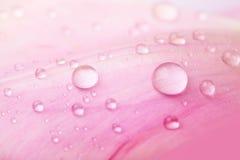 Schöne Wassertropfen auf rosafarbenen Blumenblättern Lizenzfreie Stockfotos
