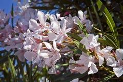 Schöne weiße Blüten lizenzfreies stockfoto