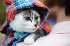 Schöne weiße blauäugige Katze in einem karierten Hemd in einer Haube auf der Schulter des Mädcheninhabers Schließen Sie herauf Po lizenzfreie stockbilder