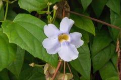 Schöne weiße Blume Stockfoto