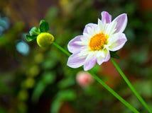 Schöne weiße Blume Stockbilder