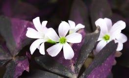 Schöne weiße Blumen stockbilder