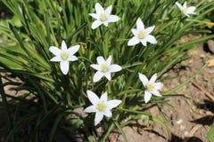 Schöne weiße Blumen blühten im Sommer Sie haben grüne Blätter Stockfoto