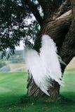 Schöne weiße Flügel Stockbilder