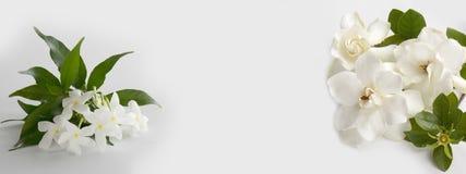 Schöne weiße Gardenieblume Stockfotografie