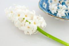 Schöne weiße Hyazinthe Lizenzfreies Stockfoto