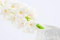 Schöne weiße Hyazinthe Stockfoto