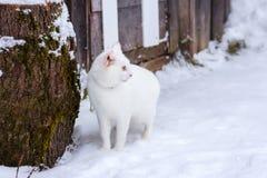Schöne weiße Katze auf Schneehintergrund Stockfoto