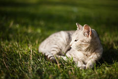 Schöne weiße Katze liegt auf Gras Lizenzfreies Stockfoto