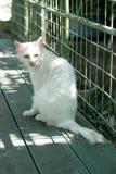 Schöne weiße Katze mit den großen Augen traurig Lizenzfreies Stockfoto
