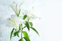 Schöne weiße Lilien lizenzfreies stockbild
