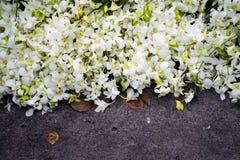 Schöne weiße Orchideen Lizenzfreie Stockfotos
