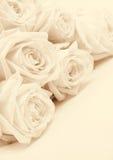 Schöne weiße Rosen tonten im Sepia als Hochzeitshintergrund Sof Lizenzfreies Stockbild