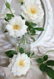 Schöne weiße Rosen, Weinleserahmen und Hintergrund des Samts Lizenzfreie Stockfotos
