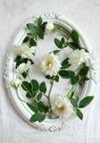 Schöne weiße Rosen, Weinleserahmen und Hintergrund des Samts Stockfotografie