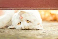 Schöne weiße spielerische Katze draußen Lizenzfreie Stockfotografie