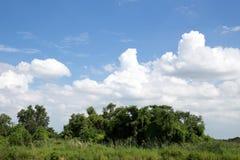 Schöne weiße Wolken mit blauem Himmel und grünen Büschen Stockbild