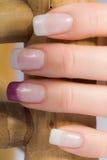 Schöne weibliche Fingernägel Stockbild