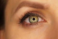 Schöne weibliche Nahaufnahme des grünen Auges Lizenzfreie Stockfotografie