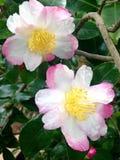 Schöne weiche Blumen Stockfoto
