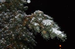 Schöne Weihnachten-Baumniederlassung mit holperigem Schnee lizenzfreies stockfoto