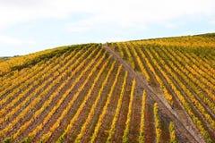 Schöne Weinberg-Landschaft Stockbild