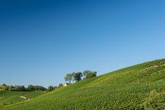 Schöne Weinberg-Landschaft in Ihringen, Süd-Deutschland Stockfotografie