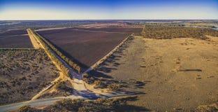 Schöne Weinberge der Riverland-Region Lizenzfreies Stockfoto