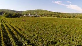 Schöne Weinberge gestalten mit Kloster im Hintergrund, Vogelperspektive landschaftlich stock video footage
