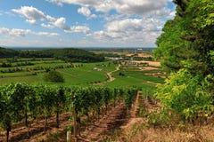 Schöne Weinberge im Kaiserstuhl, Deutschland Lizenzfreies Stockbild