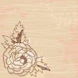 Schöne Weinlesechrysantheme Lizenzfreie Stockbilder