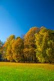 Schöne Wiese im Park Lizenzfreies Stockfoto
