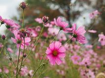 Schöne Wiese voll der Blumen Stockfoto