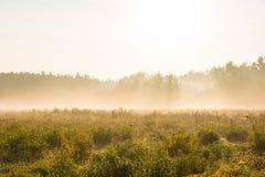 Schöne Wiesen und forrest an einem nebeligen Morgen Stockbild