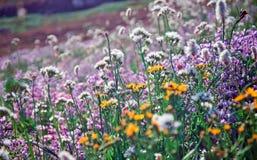 Schöne wilde Blume in Mt Rainier National Park Lizenzfreies Stockfoto