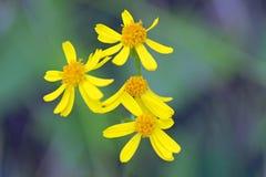 Schöne wilde Blumen Lizenzfreie Stockbilder