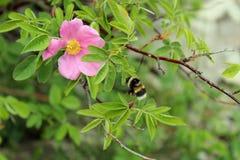 Schöne wilde Blumen Lizenzfreie Stockfotografie