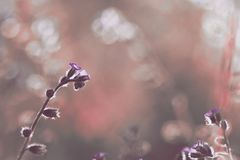 Schöne wilde Blumen Stockfoto