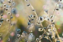 Schöne wilde Blumen Stockfotografie