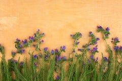 Schöne wilde Blumen auf hölzernem Hintergrund Stockbilder