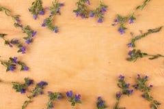 Schöne wilde Blumen auf hölzernem Hintergrund Feld der Blumen Stockbild