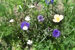 schöne wilde Blumen, die in der Wiese blühen Stockbild