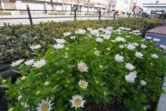 Schöne wilde Blumen, draußen Lizenzfreies Stockbild