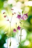 Schöne wilde Blumen im Garten auf einem grünen Hintergrund Stockbilder