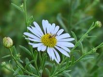 Schöne wilde Blumen mit Bienen lizenzfreie stockfotos