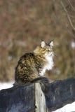 Schöne wilde Katze Lizenzfreies Stockbild