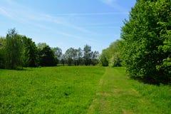 Schöne wilde Wiese im Wald im Sommer, Waltham-Abtei, Großbritannien Stockfotografie