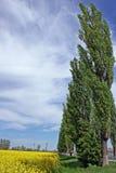 Schöne windige Landschaft lizenzfreie stockfotos