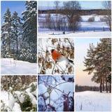 Schöne Wintercollage lizenzfreie stockbilder