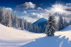 Schöne Winterlandschaft. stockfoto